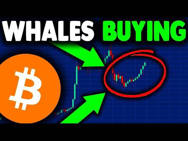 BITCOIN WHALES BUYING NOW (proof revealed)!!! BITCOIN NEW… #btc